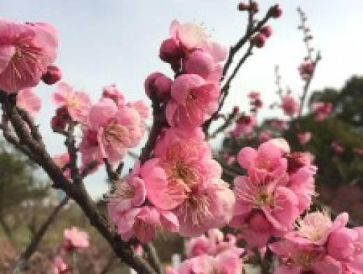 春らしくなってきました