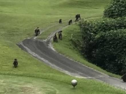 パナチタゴルフコンペ