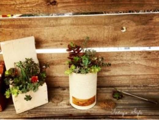 今月のパナマルシェは『多肉植物の寄せ植え』