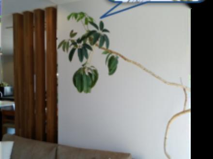 展示場の観葉植物が成長中です♪